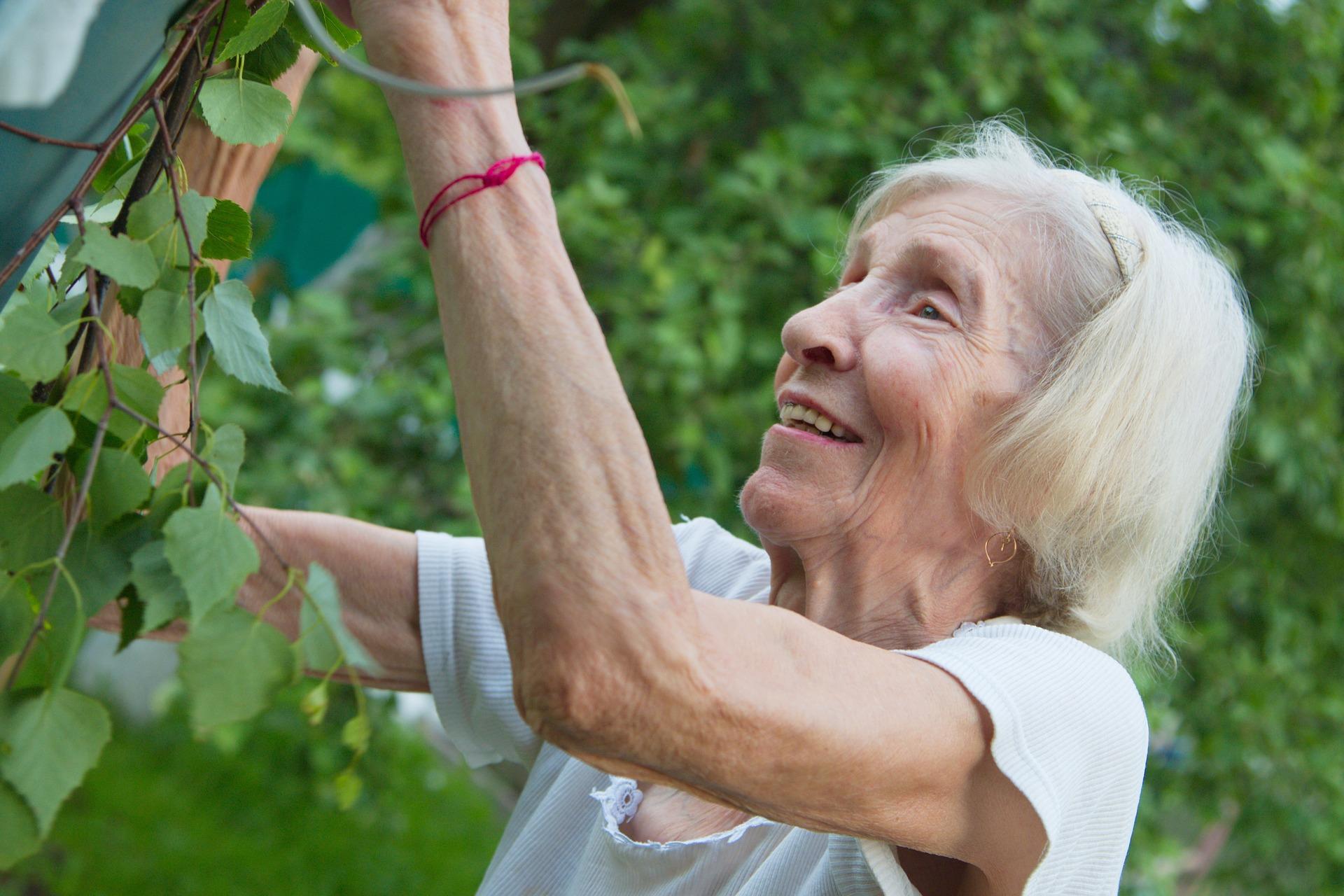 iäkäs nainen katsoo ja koskettelee pensasta