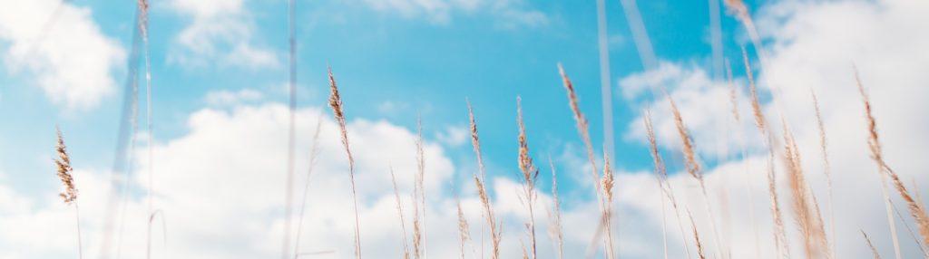 taivas ja heinänkorsia